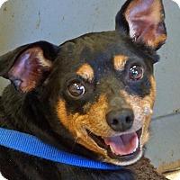 Adopt A Pet :: Kody - Sprakers, NY