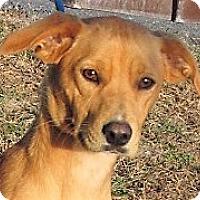 Adopt A Pet :: Emmie - Germantown, MD