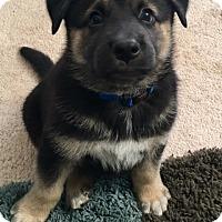 Adopt A Pet :: Memphis - San Diego, CA