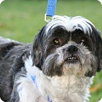 Adopt A Pet :: Odie - Carlsbad, CA