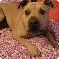 Adopt A Pet :: Seven - Roanoke, VA