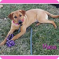 Adopt A Pet :: Maeva - Elburn, IL