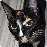 Adopt A Pet :: Manjano Jicho. - brewerton, NY