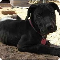 Adopt A Pet :: Katie - Golden Valley, AZ