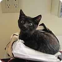 Adopt A Pet :: Betty Sue - Spotsylvania, VA