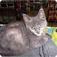 Adopt A Pet :: Willow - Warren, MI