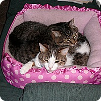 Adopt A Pet :: Debbie - Springfield, PA