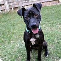 Adopt A Pet :: Jelly Bean - Austin, TX