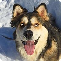 Adopt A Pet :: Kaluha - Saskatoon, SK