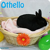 Adopt A Pet :: Othello - Santa Maria, CA