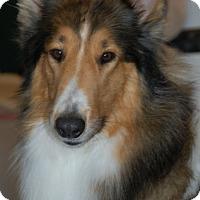 Adopt A Pet :: Kiowa - Pueblo West, CO