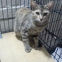 Adopt A Pet :: Sandy - Scottsdale, AZ
