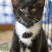 Adopt A Pet :: Melanie - Merrifield, VA