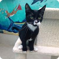 Adopt A Pet :: Rose - Newport Beach, CA