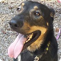Adopt A Pet :: Parker - Brattleboro, VT