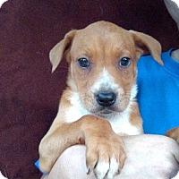 Adopt A Pet :: Gem - Oviedo, FL