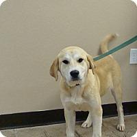 Adopt A Pet :: Sugar - Oviedo, FL