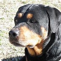 Adopt A Pet :: Otis - Laurel, MT