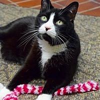 Adopt A Pet :: Benji - Des Moines, IA