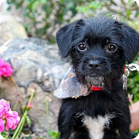 Adopt A Pet :: Squid - 8 pounds - Los Angeles, CA