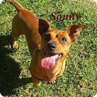 Adopt A Pet :: Sonny - El Cajon, CA
