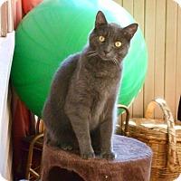 Adopt A Pet :: Kai - Acushnet, MA