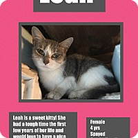 Adopt A Pet :: Leah - CLEVELAND, OH