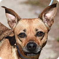 Adopt A Pet :: CHEY - New Haven, CT