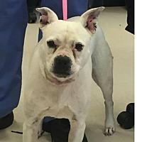 Terrier (Unknown Type, Medium) Mix Dog for adoption in Stafford, Virginia - Zoe