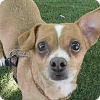 Adopt A Pet :: Manzie - Agoura, CA