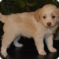 Adopt A Pet :: Hamster - Palo Alto, CA