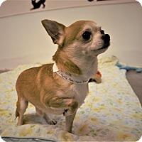 Adopt A Pet :: Slick - Seattle, WA