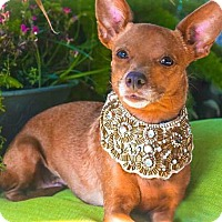 Adopt A Pet :: Carol Ann - Davis, CA