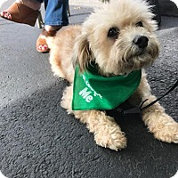 Adopt A Pet :: Bianca - San Diego, CA