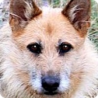 Adopt A Pet :: HANNAH(OUR