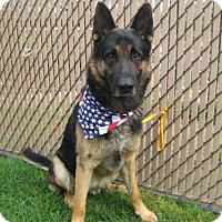 Adopt A Pet :: *SHERIFF - Norco, CA