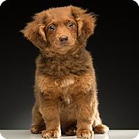 Adopt A Pet :: Chili - Los Angeles, CA