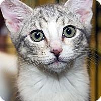 Adopt A Pet :: Gypsy - Irvine, CA