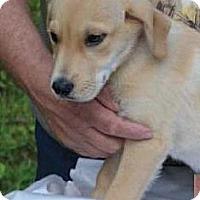 Adopt A Pet :: Tazer - Huntsville, TN