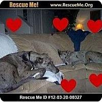 Adopt A Pet :: Courtesy List Kayla and Shea - Scottsdale, AZ
