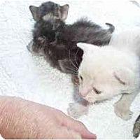Adopt A Pet :: Lionel - Westfield, MA