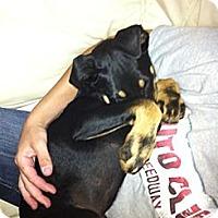 Adopt A Pet :: Miky - Orange Cove, CA