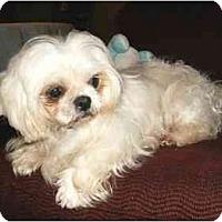 Adopt A Pet :: Maya - Mooy, AL