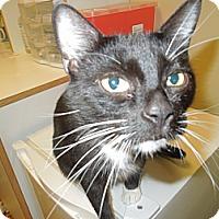 Adopt A Pet :: Angel - Medina, OH
