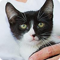 Adopt A Pet :: Beans - Irvine, CA