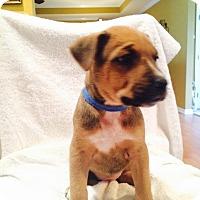 Adopt A Pet :: Mae West - Huntsville, AL
