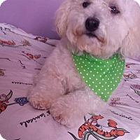 Adopt A Pet :: Nita - San Diego, CA