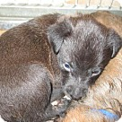 Adopt A Pet :: Rocky