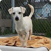 Adopt A Pet :: Dash - Santa Rosa, CA