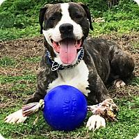 Adopt A Pet :: Ernie - Piqua, OH